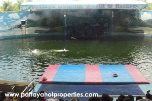 pattaya dolphin world
